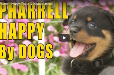 Happy Dogs = Happy Humans